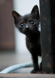 ¿Quién quiere cuidarme?    From: http://lovemeow.com/2012/10/tiny-rescue-black-kitty-then-now/