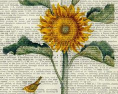 vintage book page with sunny colored image