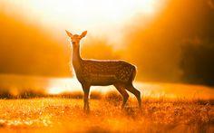 Beautiful Morning Photography
