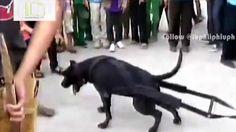 [AMAZING] The POWER of DOG