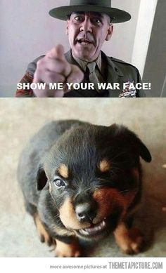 Funny| http://lovelypetcollections.blogspot.com