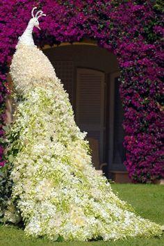 Boxwood Topiary garden figures Peacock white
