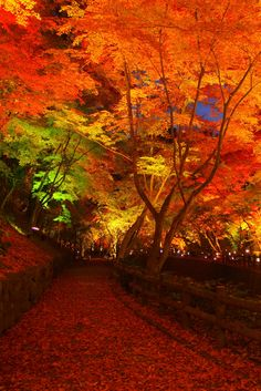 "lifeisverybeautiful: ""Kyoto, Japan Autumn Leaves """