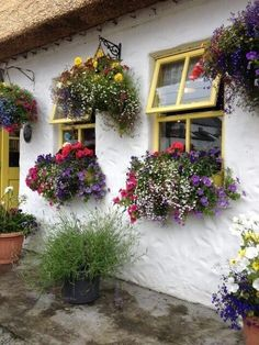 What's on your windowsill? Flower boxes add a lot of character to your home! Use flower boxes to make your house a home! Window Box Flowers, Window Boxes, Flower Boxes, Window Sill, Hanging Flowers, Hanging Plants, Cottage Windows, Garden Windows, Through The Window