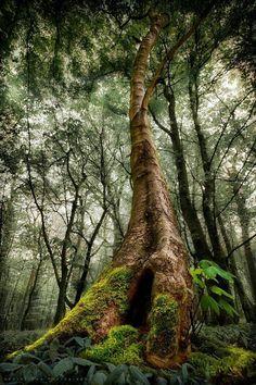 Bild könnte enthalten: Baum, Pflanze, Himmel, im Freien und Natur