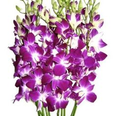 Fresh Flowers - Purple Dendrobium Orchids, (gift idea, fresh flowers, happy birthday, orchids, birthday flowers, birthday gift, birthday gifts for her, bouquet, flowers, flowers delivery)