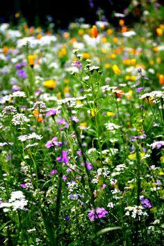 Flower at Cà Bianca dell'abbadessa