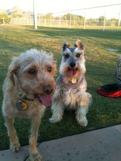 Chase with his girlfriend Sadie the Lady!