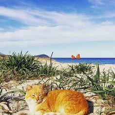 by http://ift.tt/1OJSkeg - Sardegna turismo by italylandscape.com #traveloffers #holiday | #21febbraio2016#gatto#arancione#abbandonato#faraglioni #postistupendi#sardegnanatura #sardiniaexperience#sardegna_exp#ogliastraselvaggia#lanuovasardegna#valva#ciaobelliciao Foto presente anche su http://ift.tt/1tOf9XD | February 21 2016 at 11:12PM (ph nellacorrias ) | #traveloffers #holiday | INSERISCI ANCHE TU offerte di turismo in Sardegna http://ift.tt/23nmf3B -