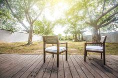 трава дерево солнечные зелени фото