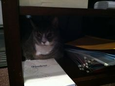 Kitty secretary: everyone should have one!