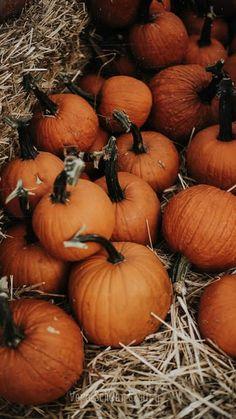 Diaries, Pumpkin, Vegetables, Food, Fall Season, Pumpkins, Journals, Essen, Vegetable Recipes
