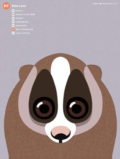 Slow Loris not a meerkcat but i like this style Endangered Animals Lessons, Zoo Animals, Cute Animals, Tiger Illustration, Graphic Illustration, Zoo Signage, Slow Loris, Retro Graphic Design, Simple Art