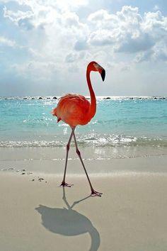 Flamenco. Amanecer en Aruba beach