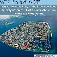 WTF Fun Facts 2 - CafeMom