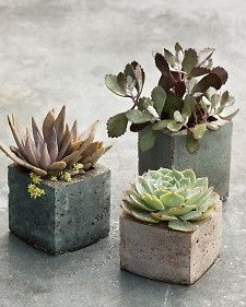 milk carton  Hypertufa's   Pots with a Personal Touch: Hypertufa - Martha Stewart Gardening - Scroll down the page.