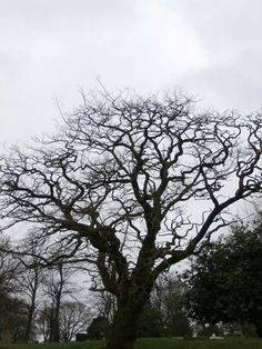 Tree taken by ginge on the 9/2/17 West Midlands