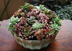 Make a coral reef themed container garden with succulents!
