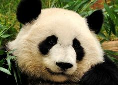 With news that Google has released a new update for Google Panda I ...