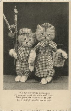 Dutch postcard from 1935... Antique photos of cats in clothes... I just can't.  It's too much cute.