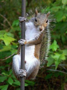 La De Da...??? A Pole dancer..... lol