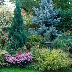Using evergreens in the landscape|BHG  This has good ideas on adding plants around my blue spruces.