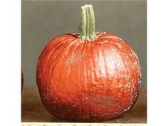 New England Sugar Pie 100 days (C. pepo) The noted small sugar pumpkin of New England. The orange fruit weigh 4-5 lbs. and have fine, sweet flesh that is superb for pies. Described by Fearing Burr in 1863.