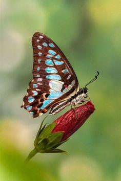 La naturaleza te brinda las mejores combinaciones de colores que puedes imaginar, como el #azul y el #café.
