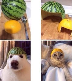 Might try this on my doggies #pets