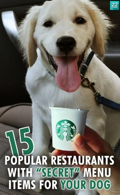 """Some restaurants have gone a step beyond being pet-friendly and actually offer """"secret"""" menu items you can order for your dog! From a Starbucks """"Puppuccino"""" to a """"pup patty"""" and In 'N' Out, find out what to ask for the next time you travel to your favorite hot spot or drive-thru to get your dog the treat he surely deserves."""