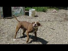 powerful video on pits...I hope people rethink...the beginning part made me so sad