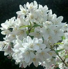 Pretty spring flowers in my garden #amateurphotography