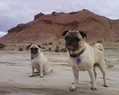 Duke & Martha in Arizona