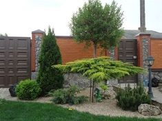 A gravel digging pit with vegetation? Front Garden Landscape, Landscape Design, Landscaping Plants, Front Yard Landscaping, Evergreen Garden, Asian Garden, Corner Garden, Vegetable Garden Design, Exterior
