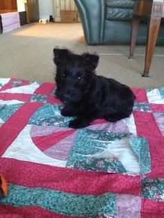Thistle! Dogs, Life, Animals, Animales, Animaux, Pet Dogs, Doggies, Animal, Dog