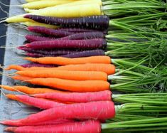 Rainbow Radish Mix 300 seeds crazy colors classic by SmartSeeds