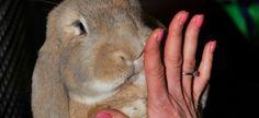 Lancering nieuwe boek Bernice Muntz op Animal Event
