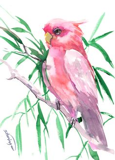 Pink Cockatoo, Original watercolor painting, 12 X 9 in, pink pets, birds, bird lover art by ORIGINALONLY on Etsy