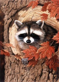 Raccoon in fall art.                                                                                                                                                     More