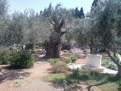 JERUSALEM. Jardim das oliveiras