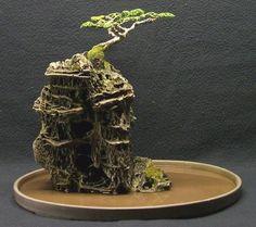 Bonsai Serut Berasal dari Alam