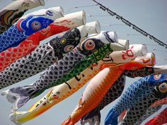 Today is Boys' Day in Japan, and though, some people set up large metal displays of samurai warrior, the most popular decorations are flying carp banners. Have a great Boys' Day! Boys Day, Child Day, Golden Week, Japanese Festival, Koi Fish Tattoo, Carpe, Festivals Around The World, Japanese Boy, Japanese Style