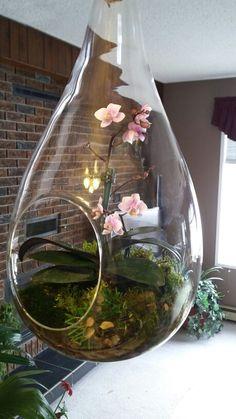 Hanging mini orchid terrarium