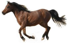 How to Sketch a Realistic Running Horse: Running Horse Reference Photo