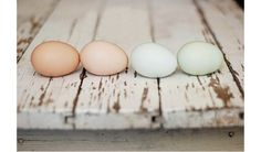 Perfect colors. We might need some dyed eggs