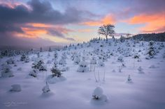 The gnome army - Single Tree, Trondheim, Gnomes, Travel Photography, That Look, Army, Snow, Explore, Landscape
