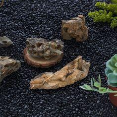 400g Black Natural Polished Pebbles 0.5cm  1cm length image 3 Terrarium Containers, Glass Terrarium, Terrarium Ideas, Planter Ideas, Terrariums, Small Potted Plants, Air Plants, Polished Pebble, Ceramic Planters