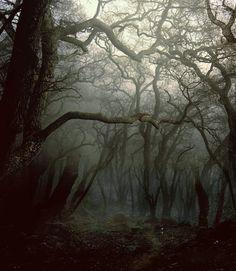 """©Phatpuppyart.com  """"Primevil Forest"""""""