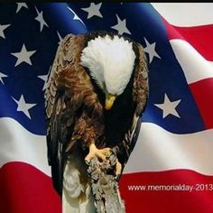 Memorial Day which is celebrated on the last Monday of May. Memorial Day History shows that it was firstly originated after the American Civil War Pray For America, I Love America, God Bless America, America America, American Pride, American Flag, American Freedom, American Spirit, American Soldiers