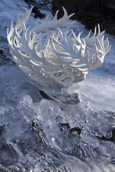 "*Ceramic Sculpture - ""Coral and Ice Reflection"" by Jennifer McCurdy"